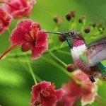 Google Hummingbird: Saiba tudo sobre a nova atualização do Google!